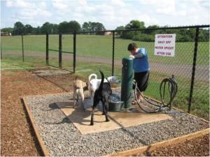 Dog Park 3
