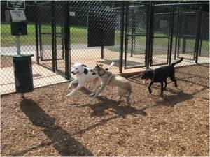 Dog Park 4
