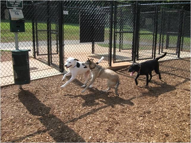 Спорт-площадка для Собак Dog-park-44